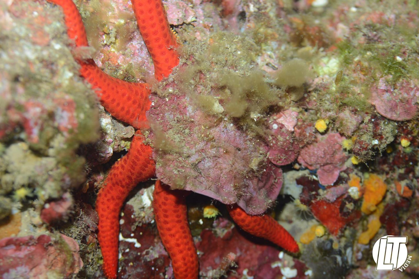 Ein Seestern in mitten von Korallen